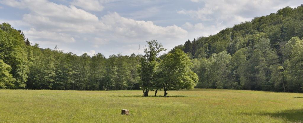 Waldlichtung regt an die Freizeit in der Natur zu verbringen